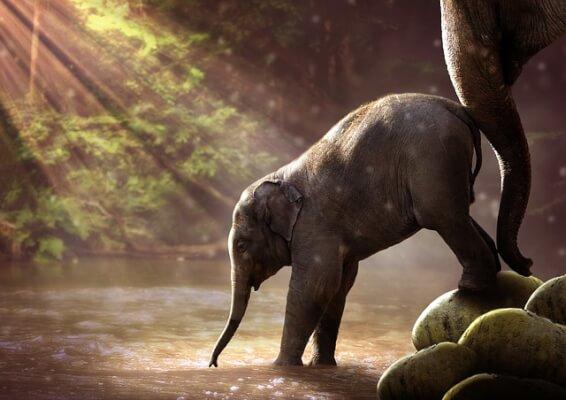 小象イメージ